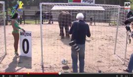 فيل يتوقع نتائج المونديال